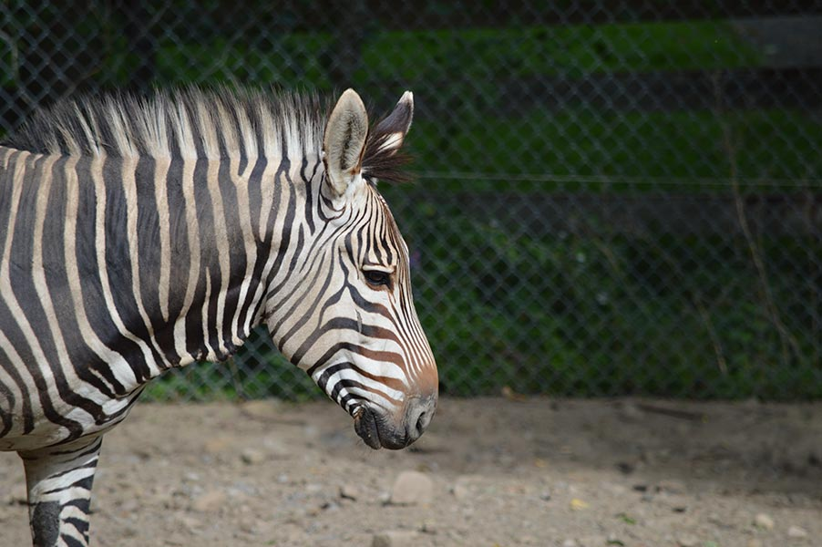 Organization Feature: Utica Zoo